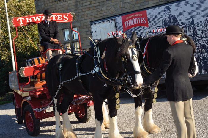 Thwaites horses